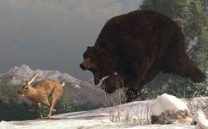 beer achtervolgd haas