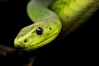Dromen over slangen