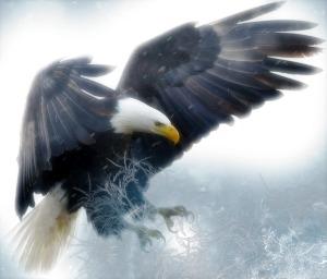 Droomreizen met een adelaar