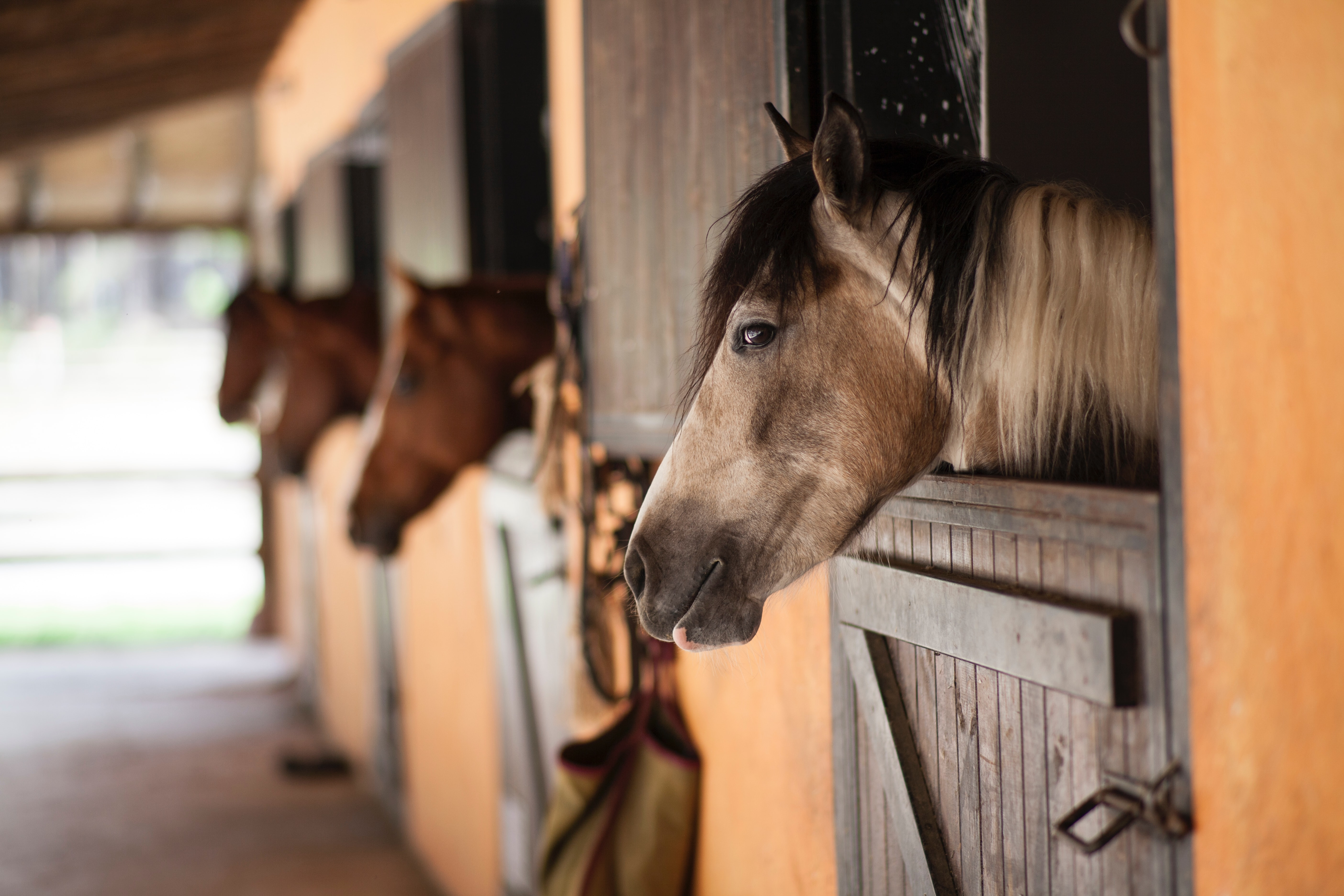Dromenuitleg, Dromen over paarden